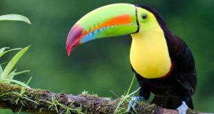 صورة حيوانات اليفة , اجمل الحيوانات الكيوت والمدهشة