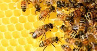 صورة تربية النحل , افكار عبقرية لتربية مفيدة وناجحة