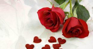 صورة اجمل ورود الحب , اروع بوكيهات ورد رومانسية جداً