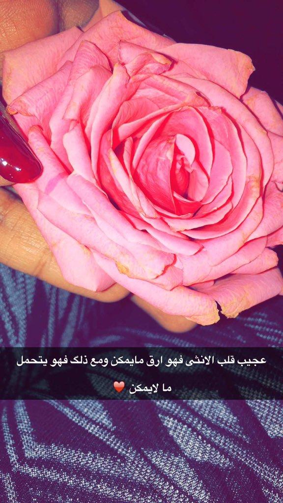 صورة كلمات عن الورد , اجمل العبارات لوصف روعه الورد