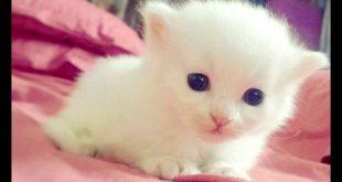 صورة قطط جميلة, اجمل انواع القطط في العالم