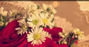 صورة خواطر عن الورد, قمة الرومانسيه والعشق في الورد