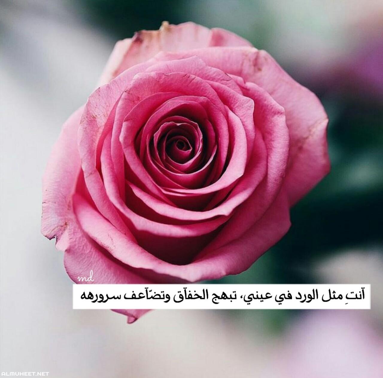 صورة ارسلتها لحبيبي واتعلق بيا, شعر عن الورد