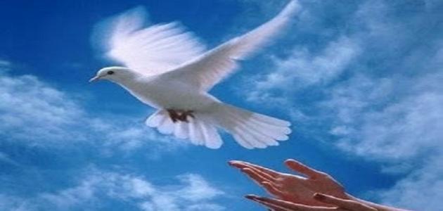 صورة ماذا تعرف عن الحريه , موضوع تعبير عن الحرية