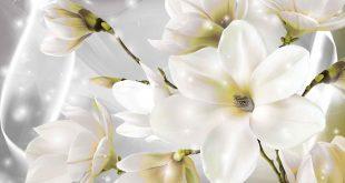صورة زهرة بيضاء لها جاذبيه خاصه , خلفيات ورود بيضاء
