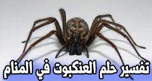 صورة حلمت ان شاهدت عنكبوت و خايفه اوى , تفسير الاحلام العنكبوت