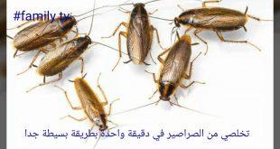 صورة اقضى على الحشرات فى ثوانى , التخلص من الصراصير للابد